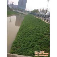 生态袋、南京生态袋防洪、生态袋江苏河道治