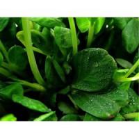 专业的蔬菜配送——口碑好的蔬菜配送品质推