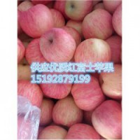 今 日 今 日 红富士苹果偏红略微反弹